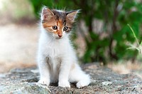 Portrait of a calico kitten sitting on a rock in the garden.