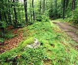 Poland. Kashubian region. Forest road