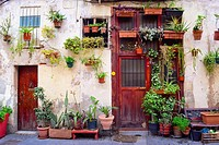 Potted plants in a facade of a house, outdoor, street. Barcelona, Catalonia, Spain.