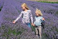 Two blond girls, five and ten years old, in a lavender field in Scania, Sweden.