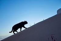 Black Cat, Granada, Andalusia, Spain, Europe.
