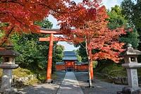 Autumn leaves at Tenryu-ji Temple, Kyoto, Japan.