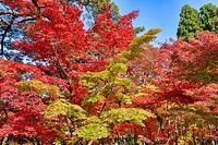 Amazing autumn colors at Eikan-do Temple, Kyoto, Japan.
