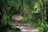 Monte Cincho. Arnuero. Cantabria. España. Europa.