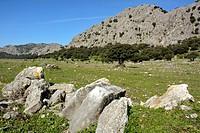 Llanos del Libar. Sierra de Grazalema Natural Park, Montejaque, Malaga, Andalucia, Spain.