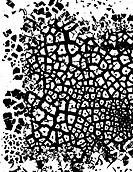Editable vector illustration of cracked grunge pattern