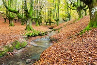Hayedo de Otzarreta (Otzarreta Beechwood), Basque Country, Spain