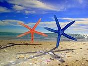Dancing starfish.