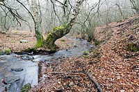 Dehesa stream in Somosierra. Sierra Norte. Madrid. Spain. Europe.