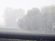 Foggy morning near Slomniki, Poland.