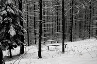 Lonely bench in a forest at winter.