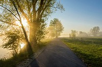 Lakeside way with sunbeams and morning mist, Streudorf, Lake Altmuhlsee, Weissenburg-Gunzenhausen, Bavaria, Germany.