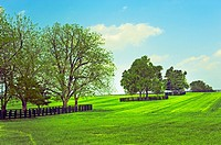 Beautiful tree landscape. Scenic highway in Franklin County, Kentucky, USA.