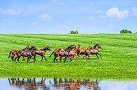 Running horses. Scenic highway in Franklin County, Kentucky, USA.