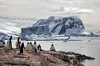 Gentoo penguin colony on a rocky outcropping on Petermann Island with a large iceberg and mountain backdrop along the Antarctic Peninsula.