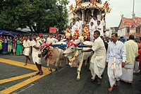 Malaysia, Penang, Thaipusam, hindu festival, oxen pulling the silver chariot,.