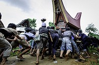 During a traditional ritual funeral of the Tana Toraja the men of the village carry the catafalque in a weird funeral procession in which the people a...