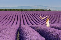 Blonde woman with scarf in a lavender field. Plateau de Valensole, Alpes-de-Haute-Provence, Provence-Alpes-Côte d'Azur, France, Europe.
