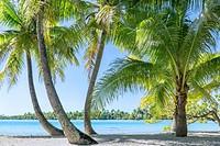 Sea view through palm trees on Moorea island in French Polynesia.