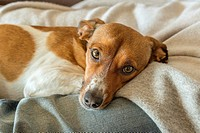 Relaxing mixed breed dog.