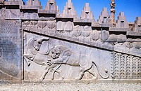 Relief of lion attacking bull on staircase wall of the Apadana Palace of Emperor Darius the Great, Persepolis archaeological site, Iran.