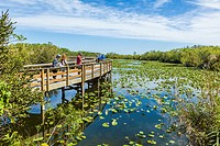 The popular Anhinga Trail at the Royal Palms Visitor Center though sawgrass marsh in the Everglades National Park Florida.