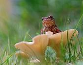 Small toad on mushroom