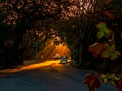 Sun rays break through an avenue of trees lining the roadway as traffic passes through. Cape Town, South Africa.