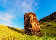Moai at the quarry on the slope of the Rano Raraku Volcano at sunrise, Rapa Nui National Park, Easter Island, Chile.