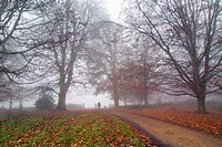 Felbrigg Park in autumn mist Norfolk UK.