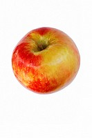 Honeycrisp apple (Malus domestica Honeycrisp). Hybrid between Macoun apple and Honeygold apple. Image of single apple isolated on white background.