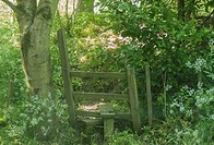 Wooden country stile in hazy sunlit glade on woodland walk in Gloucestershire, England, UK.