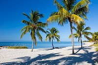 Tropical Palm trees on clean white sand Smathers Beach in Key West.