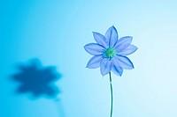 Artistic flower.