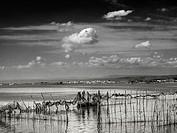 Fishermen in the Albufera, Valencia, Spain