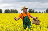 A farmer in a mustard field.