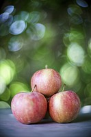 Close-up of red apples, Spain.