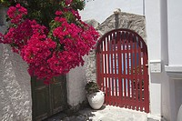 Entrance door of a whitewashed house decorated with bougainvilleas in the town center Parikia, Paros, Cyclades Islands, Greek Islands, Greece, Europe.