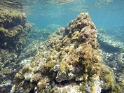 Underwater shoot in Cabo de Palos Murcia. Spain.