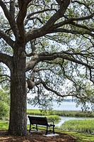 South Carolina, Beaufort, historic district, waterfront, park, bench, live oak, salt marsh, Harbor River,