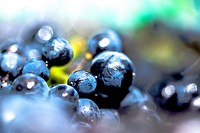 macro details of black grape clusters piled up in a basket
