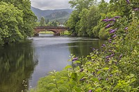 Callander bridge over the river Teith with Buddleia flower in foreground, Callander, Scotland.
