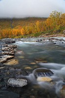 Autumn colours in Abisko national park Abiskojåkka. Lappland, Sweden