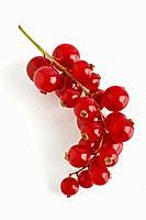 Cranberry, genus Vaccinium.