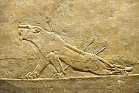 Lion Hunting - Dying Lioness, Assyrian Alabaster Bas-Relief, Circa 645-635 BCE, British Museum, London