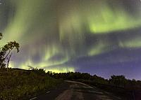 Northern Light, Aurora borealis over Björkliden in Kiruna County with a road in foreground and yellow birch trees, Swedish Lapland, Sweden.
