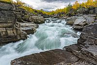 Abiskojokk in autumn season with yellow birch trees, wind moving the trees, nice blue turquoise water, Abisko, Kiruna county, Swedish Lapland, Sweden.