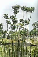 Kuching Orchid Garden, Sarawak, Malaysia.