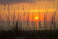 Sunset over Gulf of Mexico though seaoats on beach at Venice Florida.