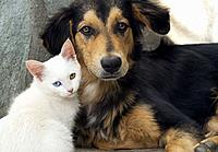 Close up of a white kitten and a young dog side by side.